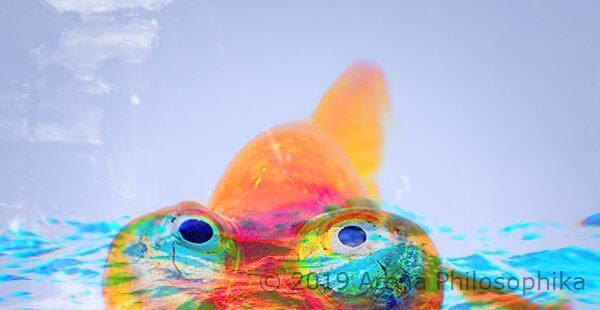 Il pesce cristiano