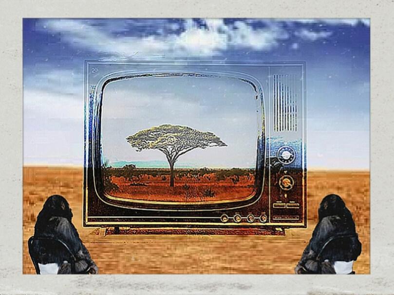 SCIMMIE E TELVISIONE