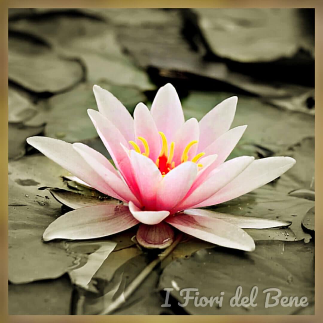 I fiori del Bene
